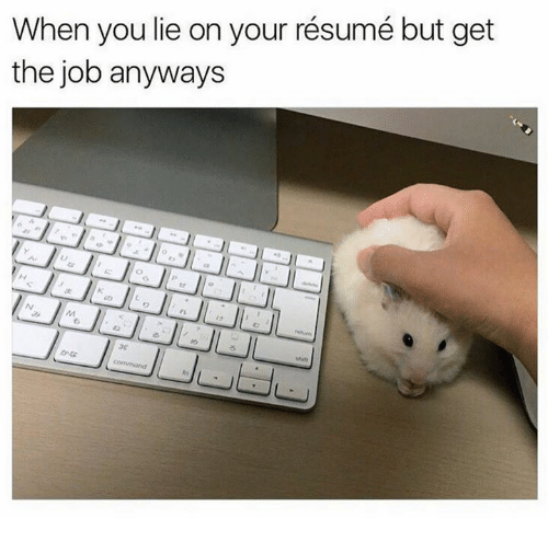 🐣 25+ Best Memes About Lie on Your Resume | Lie on Your Resume Memes