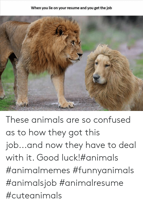 Animals, Confused, and Good: When you lie on your resume and you get the job These animals are so confused as to how they got this job...and now they have to deal with it. Good luck!#animals #animalmemes #funnyanimals #animalsjob #animalresume #cuteanimals