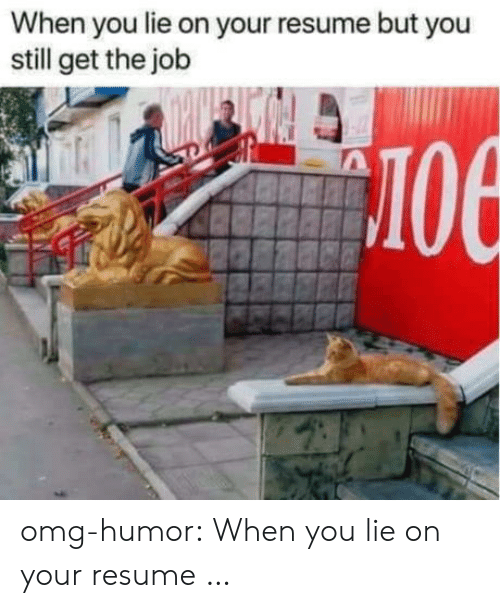 Omg, Tumblr, and Blog: When you lie on your resume but you  still get the job  лое omg-humor:  When you lie on your resume …