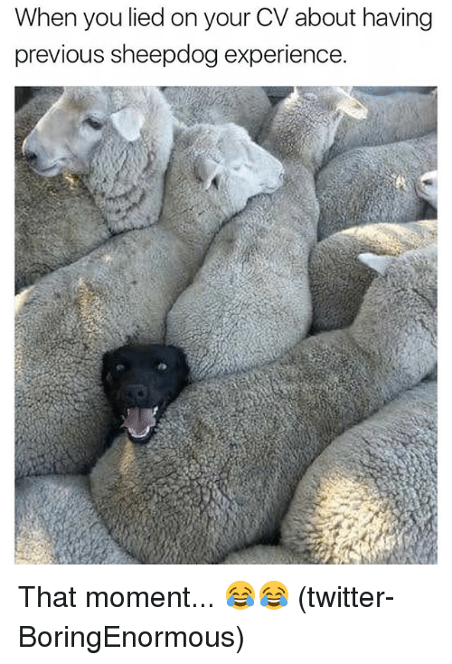 You Lied On Your Resume About Sheepdog Experience