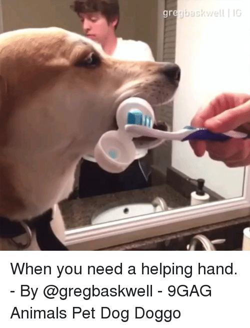 9gag, Animals, and Memes: When you need a helping hand. - By @gregbaskwell - 9GAG Animals Pet Dog Doggo