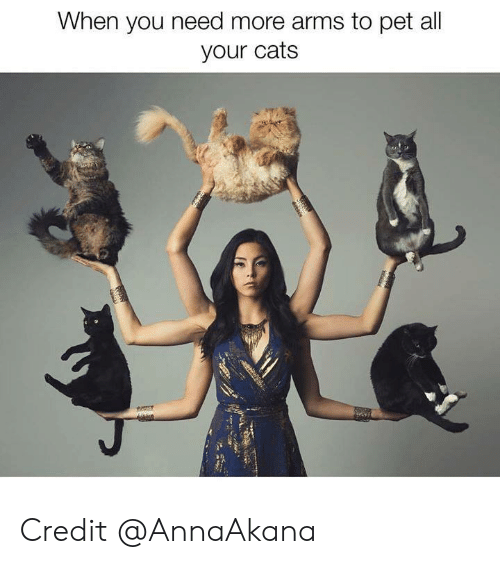 Cats, Memes, and 🤖: When you need more arms to pet all  your cats Credit @AnnaAkana