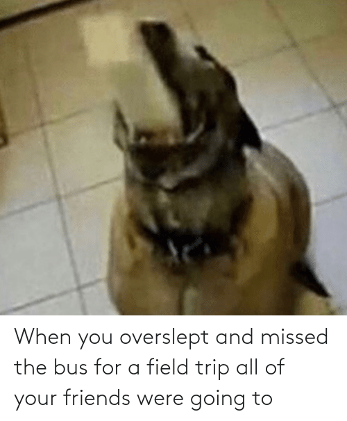 Field Trip: When you overslept and missed the bus for a field trip all of your friends were going to