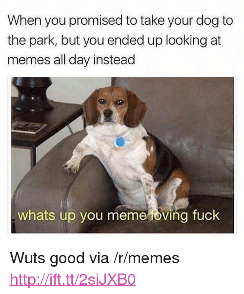 """You Meme: When you promised to take your dog to  the park, but you ended up looking at  memes all day instead  whats up you meme oving fuck <p>Wuts good via /r/memes <a href=""""http://ift.tt/2siJXB0"""">http://ift.tt/2siJXB0</a></p>"""