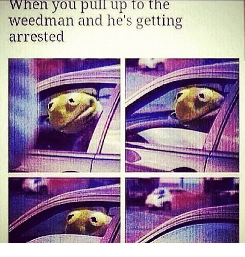You, When You, and Pull Up: When you pull up to the  weedman and he's getting  arrested