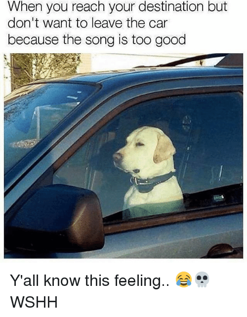 Memes, Wshh, and Good: When you reach your destination but  don't want to leave the car  because the song is too good Y'all know this feeling.. 😂💀 WSHH