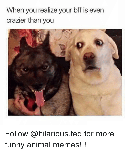 Animals Meme: When you realize your bff is even  crazier than you Follow @hilarious.ted for more funny animal memes!!!