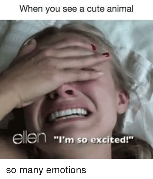 "Cute Animals, Memes, and Ellen: When you see a cute animal  ellen ""I'm so excited!"" so many emotions"