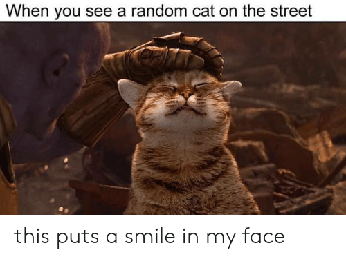 Smile, Cat, and Random: When you see a random cat on the street this puts a smile in my face