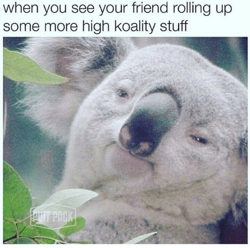 Some More, Stuff, and Friend: when you see your friend rolling up  some more high koality stuff  T PACK