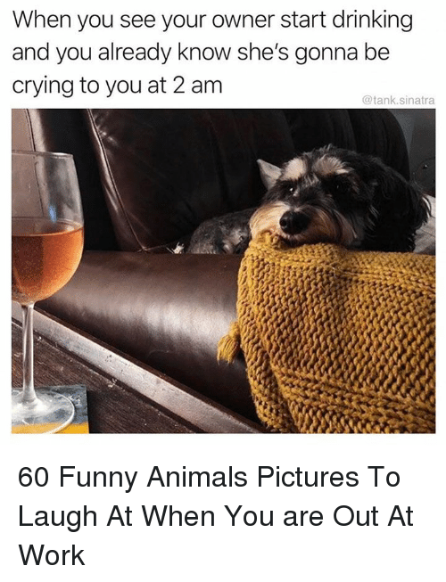 Funny animals: When you see your owner start drinking  and you already know she's gonna be  crying to you at 2 am  @tank.sinatra 60 Funny Animals Pictures To Laugh At When You are Out At Work