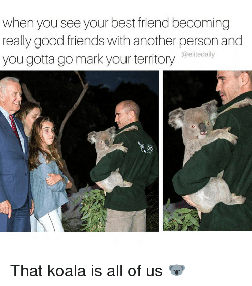 Memes, 🤖, and Personal: when you seeyour best friend becoming  really good friends with another person and  you gotta go mark your territory  elitedaily That koala is all of us 🐨