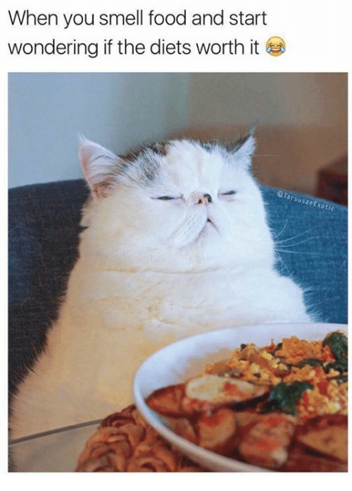 Food, Smell, and Grumpy Cat: When you smell food and start  wondering if the diets worth it  TarsuszeE  koti