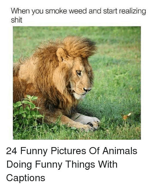 Smoke Weed: When you smoke weed and start realizing  shit 24 Funny Pictures Of Animals Doing Funny Things With Captions