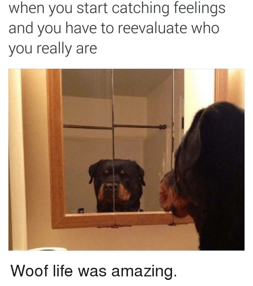 Life, Dank Memes, and Amazing: when you start catching feelings  and you have to reevaluate who  you really are Woof life was amazing.