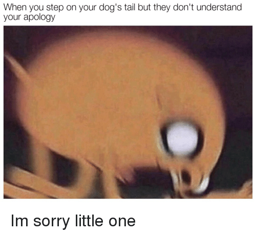 Dogs, Sorry, and Apology: When you step on your dog's tail but they don't understand  your apology Im sorry little one