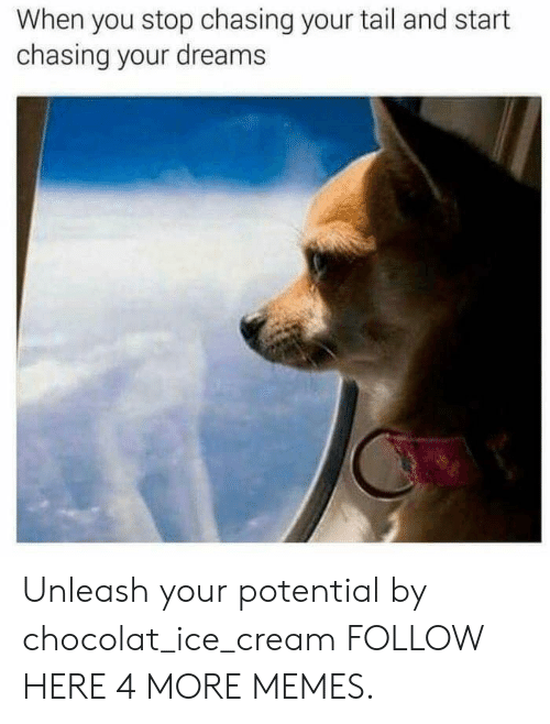 unleash: When you stop chasing your tail and start  chasing your dreams Unleash your potential by chocolat_ice_cream FOLLOW HERE 4 MORE MEMES.
