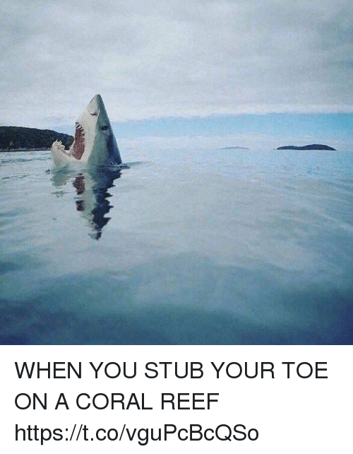 Funny, Coral, and Reef: WHEN YOU STUB YOUR TOE ON A CORAL REEF https://t.co/vguPcBcQSo