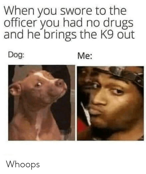 Drugs, Dog, and You: When you swore to the  officer you had no drugs  and he brings the K9 out  Dog  Me: Whoops