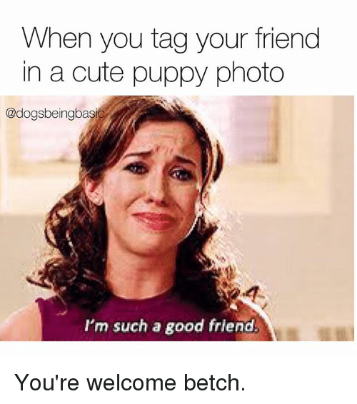 cute puppy: When you tag your friend  in a cute puppy photo  @dogsbeingbasi  I'm such a good friend You're welcome betch.