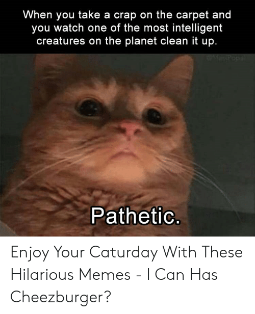 Caturday Meme: When you take a crap on the carpet and  you watch one of the most intelligent  creatures on the planet clean it up.  Patheti Enjoy Your Caturday With These Hilarious Memes - I Can Has Cheezburger?