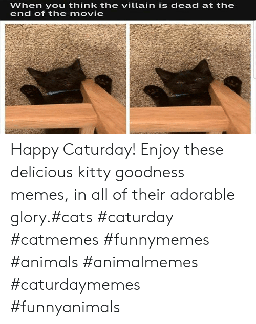 Animals, Cats, and Caturday: When you think the villain is dead at the  end of the movie Happy Caturday! Enjoy these delicious kitty goodness memes, in all of their adorable glory.#cats #caturday #catmemes #funnymemes #animals #animalmemes #caturdaymemes #funnyanimals