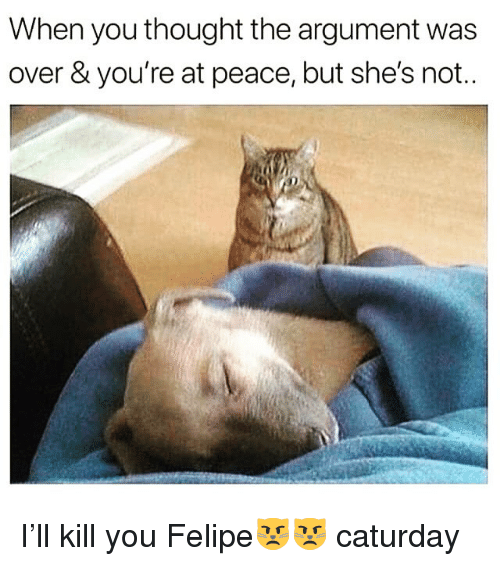 Caturday, Funny, and Peace: When you thought the argument was  over & you're at peace, but she's not.. I'll kill you Felipe😾😾 caturday