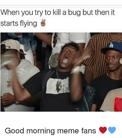 bugging: When you try to kill a bug but then it  starts flying Good morning meme fans ❤️💙