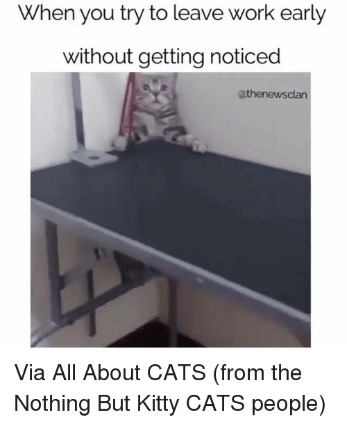 Kitties, Memes, and 🤖: When you try to leave work early  without getting noticed  athenewsclan Via All About CATS (from the Nothing But Kitty CATS people)
