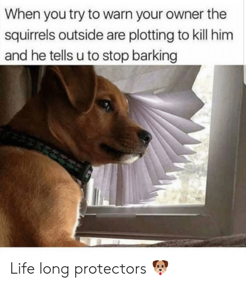 Life, Him, and You: When you try to warn your owner the  squirrels outside are plotting to kill him  and he tells u to stop barking Life long protectors 🐶