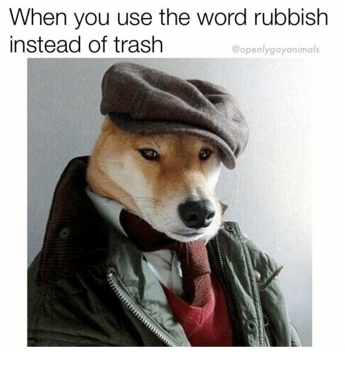 rubbish: When you use the word rubbish  instead of trash  @openlygayanimals