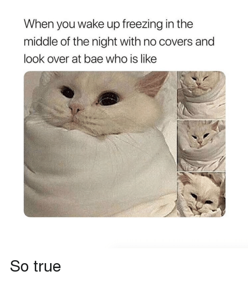 Bae, True, and Covers: When you wake up freezing in the  middle of the night with no covers and  look over at bae who is like So true