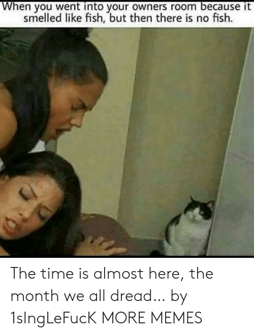 Dank, Memes, and Target: When you went into your owners room because it  smelled like fish, but then there is no fish. The time is almost here, the month we all dread… by 1sIngLeFucK MORE MEMES