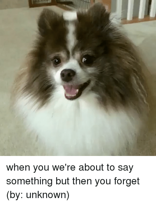 Memes, 🤖, and Unknown: when you we're about to say something but then you forget (by: unknown)