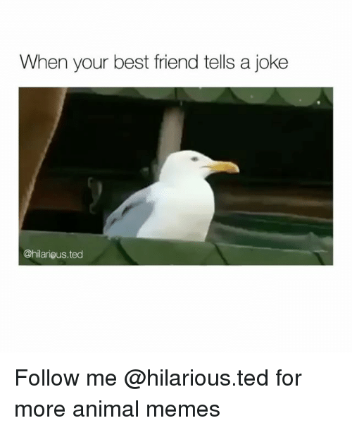 Best Friend, Funny, and Memes: When your best friend tells a joke  @hilarious.ted Follow me @hilarious.ted for more animal memes
