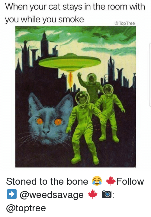 Boning: When your cat stays in the room with  you while you smoke  @TopTree Stoned to the bone 😂 🍁Follow ➡ @weedsavage 🍁 📷: @toptree