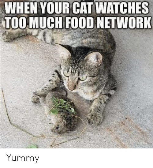 Yummy: WHEN YOUR CAT WATCHES  TOOMUCH FOOD NETWORK Yummy