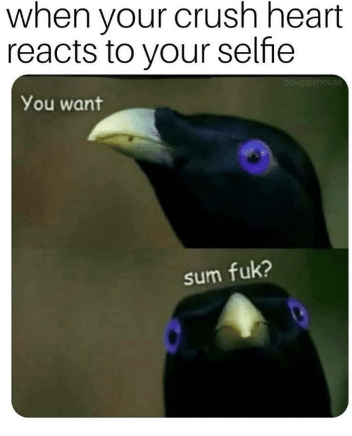 Crush, Selfie, and Heart: when your crush heart  reacts to your selfie  You want  sum fuk?