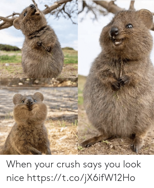 When Your Crush: When your crush says you look nice https://t.co/jX6ifW12Ho