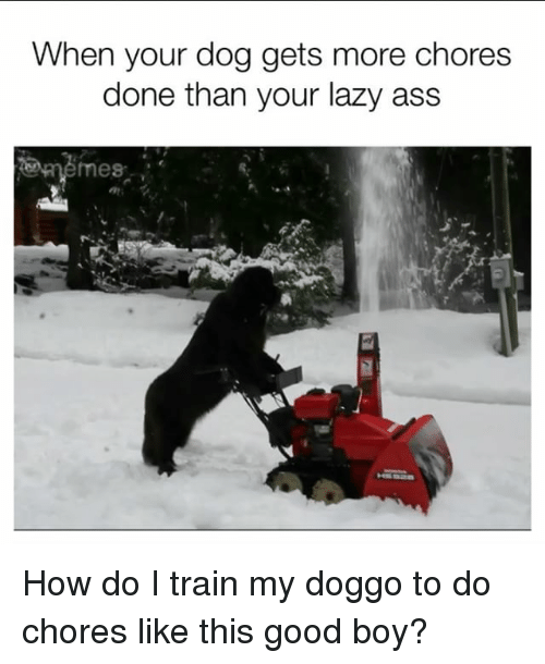 Ass, Lazy, and Memes: When your dog gets more chores  done than your lazy ass  memes How do I train my doggo to do chores like this good boy?