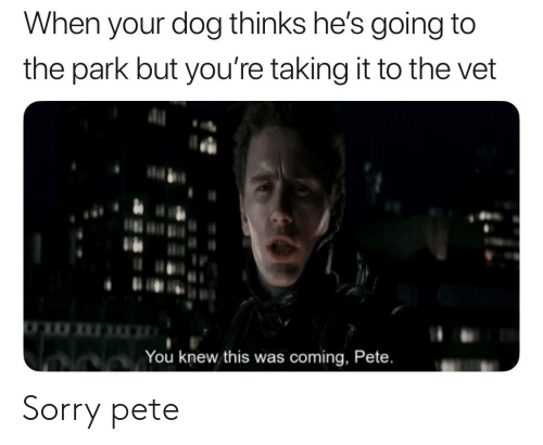 Sorry, Dog, and Park: When your dog thinks he's going to  the park but you're taking it to the vet  You knew this was coming, Pete. Sorry pete