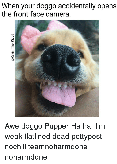 Front Face Camera: When your doggo accidentally opens  the front face camera Awe doggo Pupper Ha ha. I'm weak flatlined dead pettypost nochill teamnoharmdone noharmdone