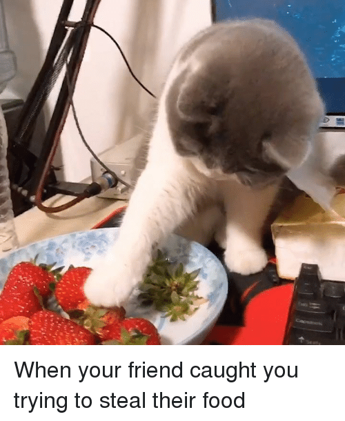 Dank, Food, and 🤖: When your friend caught you trying to steal their food