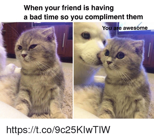 Bad, Memes, and Time: When your friend is having  a bad time so you compliment them  You are awesóme https://t.co/9c25KIwTlW