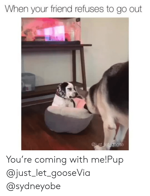 PUP: When your friend refuses to go out  @iust let goose You're coming with me!Pup @just_let_gooseVia @sydneyobe
