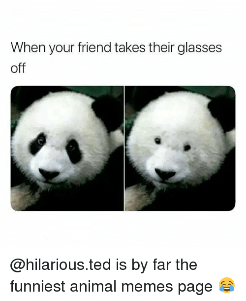 Memes Ted And Animal When Your Friend Takes Their Glasses Off Hilarious