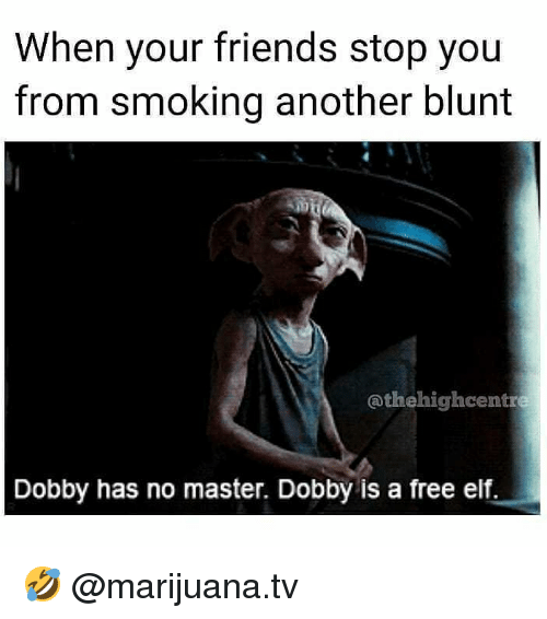 Elf, Friends, and Memes: When your friends stop you  from smoking another blunt  @thehighcentre  Dobby has no master. Dobby is a free elf. 🤣 @marijuana.tv