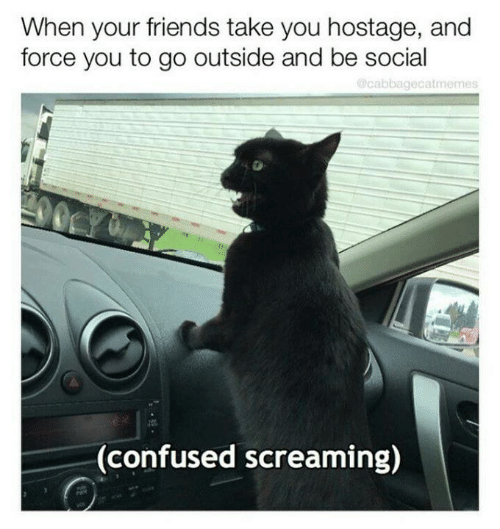 Aww Memes: When your friends take you hostage, and  force you to go outside and be social  Ocabbagecatmemes  CY  00  (confused screaming)