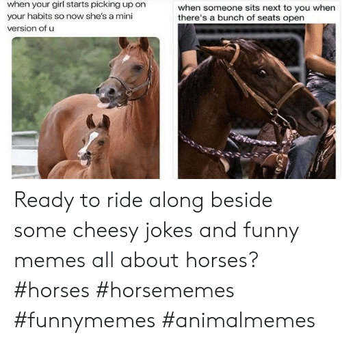 Funny, Horses, and Memes: when your girl starts picking up on  when someone sits next to you when  there's a bunch of seats open  your habits so now she's a mini  version of u Ready to ride along beside some cheesy jokes and funny memes all about horses?#horses #horsememes #funnymemes #animalmemes