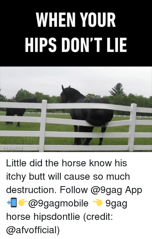 Hips Don't Lie: WHEN YOUR  HIPS DON'T LIE  LIGGoafvofficial Little did the horse know his itchy butt will cause so much destruction. Follow @9gag App📲👉@9gagmobile 👈 9gag horse hipsdontlie (credit: @afvofficial)
